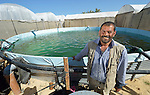 Abdulah Sliman stands in front of his water storage tank in Al Fukari, Gaza. The farmer grows vegetables in several greenhouses, and uses a catchment system to capture the rainwater that falls on the greenhouses. That water he mixes with increasingly saline groundwater he pumps from a well. The system allows him to produce a greater quantity of more lucrative crops, at a greater profit because he isn't forced to buy as much water for irrigation. Sliman and several other farmers in the community received assistance in building the systems from Diakonie Katastrophenhilfe, a member of the ACT Alliance. In the wake of the devastating 2014 war, ACT Alliance members are supporting health care, vocational training, rehabilitation of housing and water systems, psycho-social care, and other humanitarian actions throughout the besieged Palestinian territory. Quality water is growing increasingly scarce in Gaza, as Israel drains the aquifer for its own development, pulling salt water into the aquifer from the west.