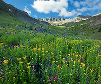 San Juan Mountains, CO<br /> American Basin with paintbrush (Castilleja rhexifolia),  sneezeweed (Dugaldia hoopesii), delphinium (Delphinium barbeyi) and other wildflowers in a meadow beneath Handies Peak