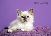 Xavier, ANIMALS, cats, photos+++++,SPCHCATS735,#a# Katzen, gatos
