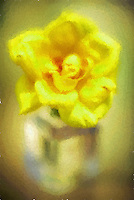 Yellow rose in glass bottle in soft focus