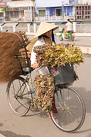 Vendor hauling reeds to central market in HoiAn, Central Vietnam