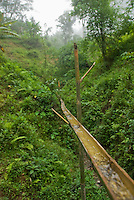 An aqueduct made of bamboo carries water from a small creek to a jug for local residents to collect.  Rainforest southwest of Dili, Timor-Leste (East Timor)