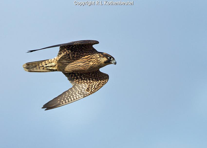Reifel Migratory Bird Sanctuary, British Columbia, Canada<br /> 9/24/2014