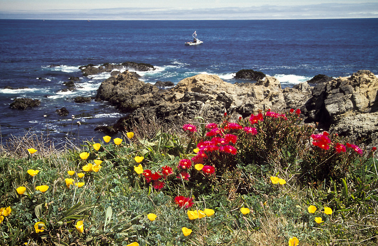 Wildflowers on the Mendocino Headlands