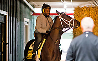 BALTIMORE, MD - MAY 12: Kentucky Derby winner Always Dreaming walks in the Stakes Barn after exercising in preparation for the Preakness Stakes next week at Pimlico Race Course on May 12, 2017 in Baltimore, Maryland.(Photo by Scott Serio/Eclipse Sportswire/Getty Images)