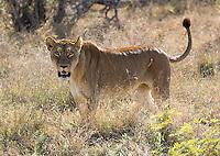 We saw a number of lions in Kruger National Park.