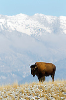 National Bison Range near St. Ignatius, Montana<br />