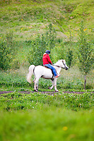 Person riding white Icelandic horse