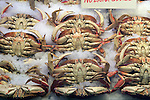 Crabs for sale at Pike Place Market in Seattle. For over a century a century, the Pike Place Market, has become a city institution and a national attraction, bringing in over a million tourists a year. .Jim Bryant Photo. ©2010. ALL RIGHTS RESERVED.