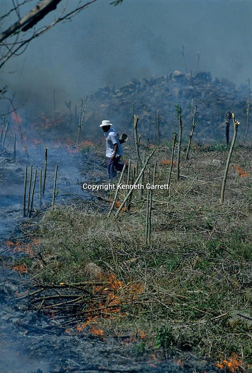 Agriculture; Slash & Burn; Mayapan; Mexico; Maya; Ancient Cultures; The Americas; Dily Life; Meso America