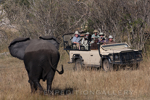 Safari vehicle with tourists watching and photographing African elephant in the Linyanti Reserve, Botswana. [NO MODEL RELEASE]