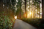Washington, Western, Puget Sound, Fidalgo Island. Loop road in Washington Park leads through the coastal trees in the setting sun.