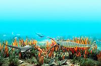 Ancient Silurian Ocean
