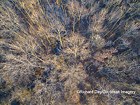 63808-3113 Aerial view of bare trees at sunset Marion Co. IL