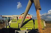 GERMANY, maize harvest with Claas combine harvester / DEUTSCHLAND Maisernte mit Claas Maehdrescher in Sachsen-Anhalt