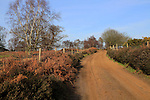 Sandy path through heathland, Suffolk Sandlings, Shottisham, Suffolk, England