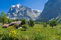 CHE, Schweiz, Kanton Bern, Berner Oberland, Grindelwald: Chalets vorm Wetterhorn 3.701 m im Fruehling | CHE, Switzerland, Bern Canton, Bernese Oberland, Grindelwald: Chalet - Swiss residential builidngs - in front of Wetterhorn mountain 12.143 ft