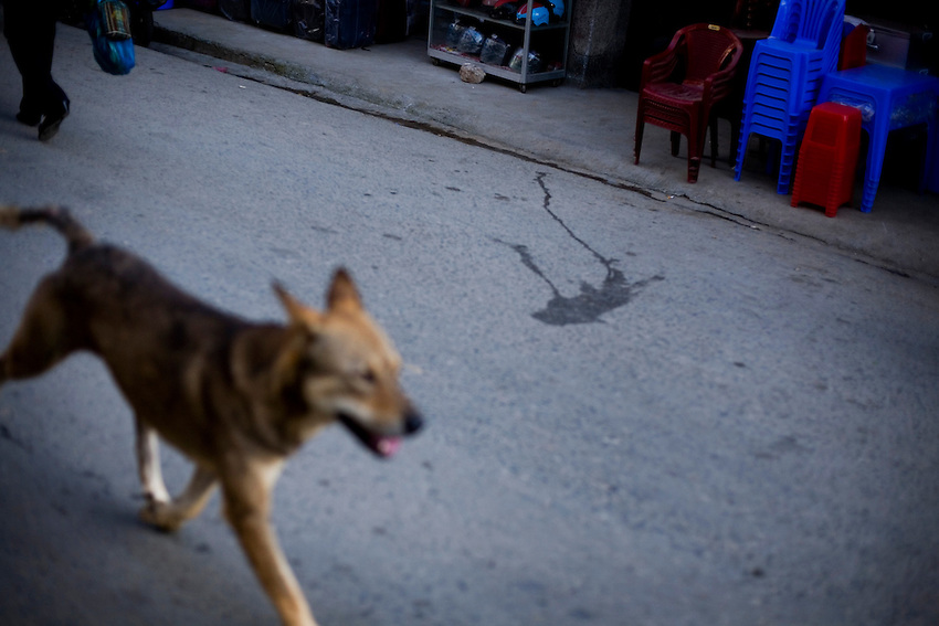 A stray dog walks down the street in Sapa, Vietnam, July 5, 2010.