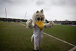 The home club's mascot Syd the Seagull on the pitch before AFC Fylde took on Aldershot Town in a National League game at Mill Farm, Wesham. The fixture was played against the backdrop of the total postponement of all Premier League and EFL football matches due to the the coronavirus outbreak. The home team won the match 1-0 with first-half goal by Danny Philliskirk watched by a crowd of 1668.