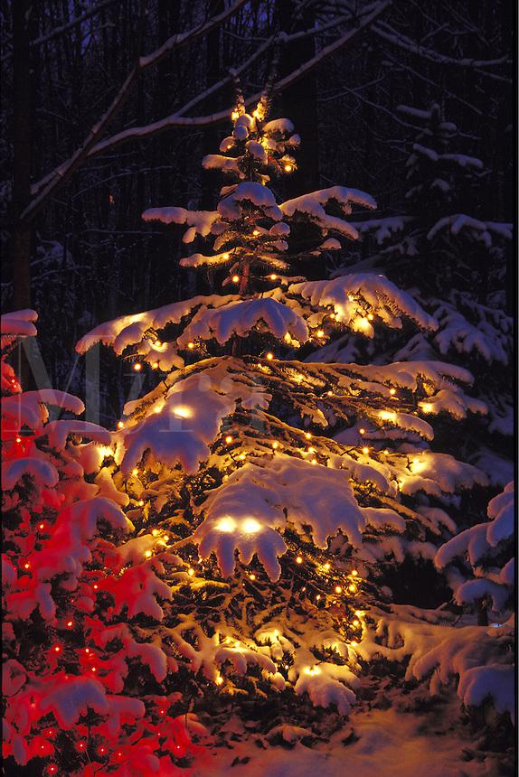 Christmas tree with lights.