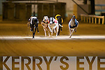 TOP DOG: Airforce Diva no.2 winner of the Gallivan-Murphy-Hooper-Dolan Classic Final in a time of 28:32 2nd was Catching Dreams no.3 and 3rd was Ballymac Vic no.4 at the Kingdom Greyhound Stadium on Friday.