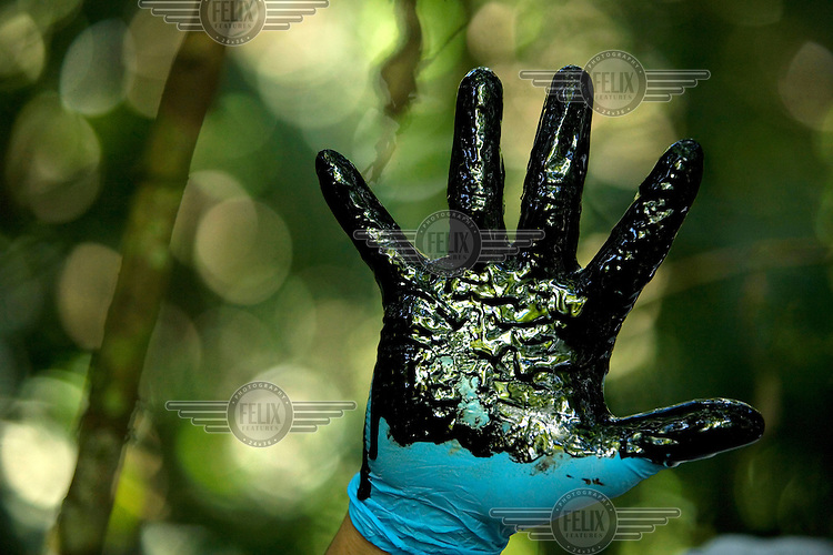 Donald Moncayo, shows a gloved hand coated in crude oil, during a tour of sites in Ecuador to show the pollution left behind by Texaco's operations. This site is at a well called Agua Rico No.4. A class action lawsuit was brought against US multinational oil giant Texaco (acquired by Chevron in 2001) by more than 30,000 Ecuadorians. The case has been in the Ecuadorian courts since 2003 and relates to the dumping of billions of gallons of toxic materials into unlined pits and Amazonian rivers. In February 2011 the court ruled that Chevron should pay a fine totalling 9.5 billion USD. However, Chevron has stated that the ruling is 'illegitimate and unenforceable' and has started numerous counter proceedings in US courts. There is some doubt as to whether it will be possible to force Texaco to pay the fine.