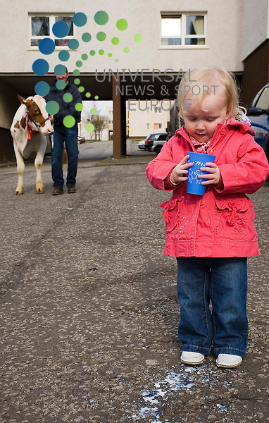Free milk for nursery children. Announcement of new scheme to.give all youngsters under 5 in Glasgow nurseries fresh milk every day. Dairy.farmer James Rankin will be at a nursery with a live cow to demonstrate.where milk comes from. Little Me Nursery, 7 Aray Street, Maryhill. amy stevenson gives Rosie the dairy cow a drink.......universal news and sport. 06/04/2009.