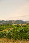 Brick House Vineyard and winery near Newberg, Oregon produces a variety of organic wines.