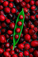 Cranberries. (Photo by Andy Rogers)