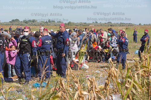 Line of police officers stand guard at a collection point of illegal migrants next to a corn field near Roszke (about 174 km South of capital city Budapest), Hungary on September 07, 2015. ATTILA VOLGYI