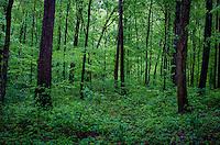 Ozark National Forest in Arkansas.