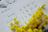 La mimosa, simbolo della festa della donna. Mimosa, Acacia dealbata, symbol of celebration of women. ...