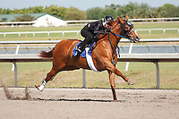 #7.Fasig-Tipton Florida Sale,Under Tack Show. Palm Meadows Florida 03-23-2012 Arron Haggart/Eclipse Sportswire.