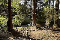 FOREST_LOCATION_90131
