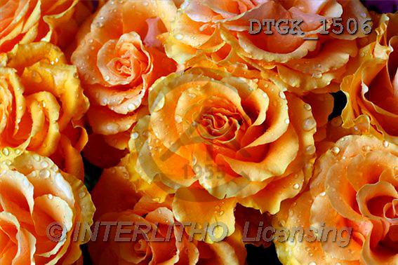 Gisela, FLOWERS, photos(DTGK1506,#F#) Blumen, flores, retrato