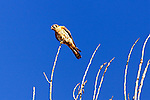 Bird on a branch, Wild Birds Corona del Mar, CA.  Photo by Alan Mahood.