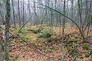 An abandoned cellar hole along the old North and South Road (now Long Pond Road) Road in Benton, New Hampshire USA. Based on an 1860 historical map of Grafton County this was the homesite of Enos Wells. The New Hampshire forest it littered with sites like this one that have been forgotten about.