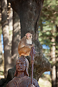 Shimla, Himachal Pradesh, India. Monkey sitting on the statue of a guard by the Monkey Temple, dedicated to the Hindu God Hanuman, on the Jakhoo Hill.