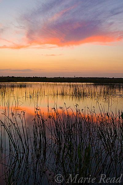 Wetland at sunset, Viera Wetlands, Florida, USA