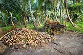 INDONESIA, Mentawai Islands, Kandui Resort,  heap of coconuts near coconut palm trees and a small hut