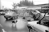 ROMANIA, In the Carpathes, 2000..A dog in the middle of vendors of mici, the typical Romanian sausage..ROUMANIE, Carpathes, 2000..Un chien au milieu des vendeurs de mici, la saucisse traditionnelle roumaine..© Bruno Cogez