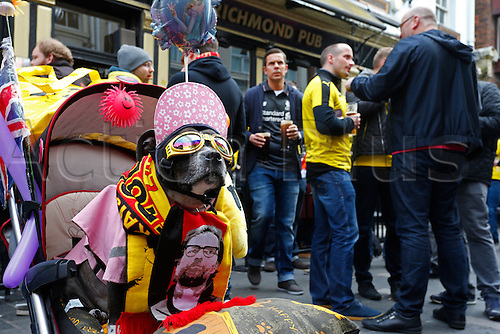 14.04.2016. Liverpool, England.  Liverpool supporter Princess Cleopatra Superchill soaks-up the atmosphere with Liverpool and Borussia Dortmund fans at the Richmond Pub in Liverpool city centre while they wait for tonight's UEFA Europa League quarter finals soccer match between Liverpool FC and Borussia Dortmund at the Anfield stadium in Liverpool, north west Britain 14 April 2016.