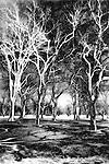 Bare trees, oaks, minnehaha park, minnesota