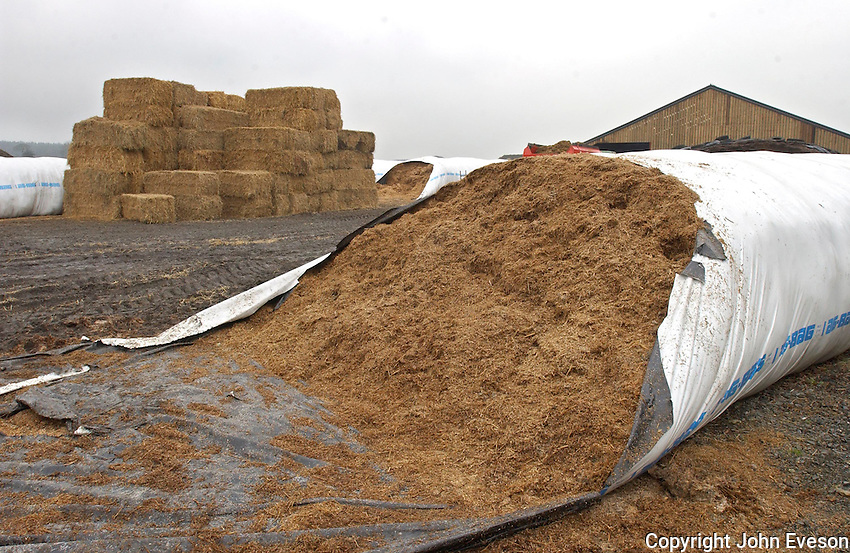 Silage in an Ag-bag.