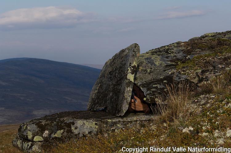 Naturlig skytestilling i reinsfjellet ---- Natural firing position