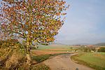 Europa, DEU, Deutschland, Hessen, Niederwalgern, Agrarlandschaft, Herbst, Baum, Herbstliche Farben, Kategorien und Themen, Natur, Umwelt, Landschaft, Jahreszeiten, Stimmungen, Landschaftsfotografie, Landschaften, Landschaftsphoto, Landschaftsphotographie, ....[Fuer die Nutzung gelten die jeweils gueltigen Allgemeinen Liefer-und Geschaeftsbedingungen. Nutzung nur gegen Verwendungsmeldung und Nachweis. Download der AGB unter http://www.image-box.com oder werden auf Anfrage zugesendet. Freigabe ist vorher erforderlich. Jede Nutzung des Fotos ist honorarpflichtig gemaess derzeit gueltiger MFM Liste - Kontakt, Uwe Schmid-Fotografie, Duisburg, Tel. (+49).2065.677997, ..archiv@image-box.com, www.image-box.com]