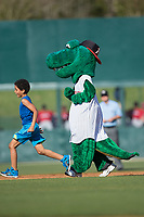 Kannapolis Intimidators mascot Tim E. Gator races a young fan around the bases between innings of the game against the Lakewood BlueClaws at Kannapolis Intimidators Stadium on April 9, 2017 in Kannapolis, North Carolina.  The BlueClaws defeated the Intimidators 7-1.  (Brian Westerholt/Four Seam Images)