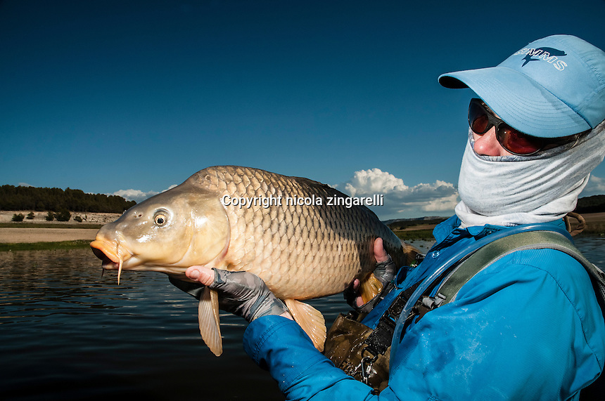 Carps, in certain Spanish lakes, due to the large presence of baitfish develop a greater predatory behavior and feed on baitfish, hence is possible to catch them on lures.