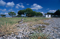 Killdeer, Charadrius vociferus,adult on nest with eggs, Welder Wildlife Refuge, Sinton, Texas, USA