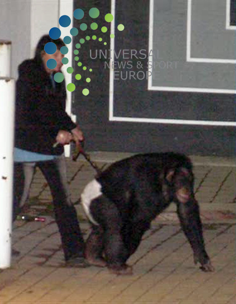 A FORMER TV star chimpanzee was shot dead by US police after it went on an unexplained rampage.<br /> Travis, a 15-year-old chimpanzee who has appeared in TV commercials and a talkshow, badly injured a woman and attacked  the police before an officer cornered in his car was forced to shoot the simian, the Associated Press reports. <br /> The woman, who is in a serious condition in hospital,  was visiting Sandra Herold at her Stamford, Connecticut home when long-time family pet Travis leapt on her as soon as she emerged from the car and made a savage attack to the face.<br /> Ms Hergold ran inside to call police and fetch a weapon after she failed to wrestle the chimpanzee off her friend.<br /> &quot;She retrieved a large butcher knife and stabbed her longtime pet numerous times in an effort to save her friend, who was really being brutally attacked,&quot; Stamford police Lieutenant Richard Conklin  said.<br /> Travis finally retreated but was still on the Herold property when police arrived and surrounded the woman so medics could treat her.<br /> The enraged chimpanzee charged at officers who retreated to their cars.<br /> Two police officers are reported to have unspecifed injuries.<br /> Picture: Universal News and Sport - 16/02/2009.<br /> For editorial use  only. Additional clearance required for commercial or promotional use. Images may not be altered or modified. No Internet Use,  All pictures must be credited to www.universalnewsandsport.com 0844 884 51 63<br /> Universal News does not claim any Copyright or License in the attached material. Any downloading fee charged by Universal News and Sport is for Universal News services only. We are advised that videograbs should not be used more than 48 hours after the time of original transmission, without the consent of the copyright holder). Picture: Universal News And Sport (Scotland).